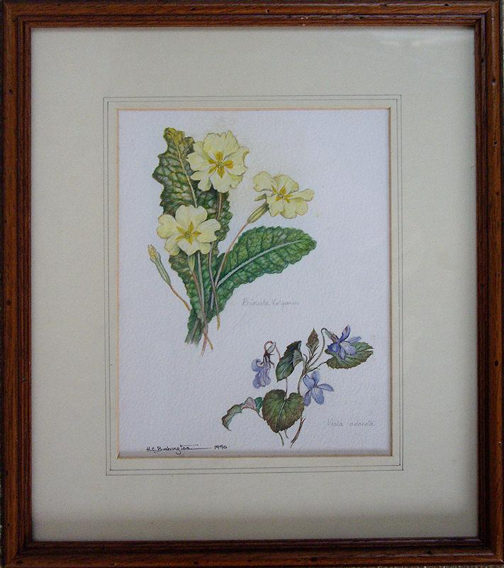 Watercolour._Primula_Vulgaris_and_Viola_Odarata._Helen_C_Babington,_Somerset_artist._Flourished_1976-1990._Painted_multiple_British_wildlife_works_fo