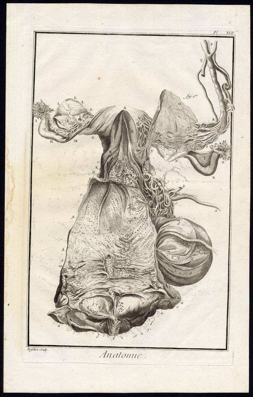 Antique Print Anatomy Female Reproductive System Uterus Diderot