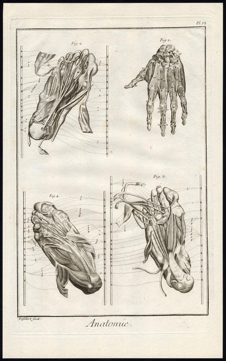 Antique Print Human Anatomy Hand Foot Muscles Diderot Defehrt 1751