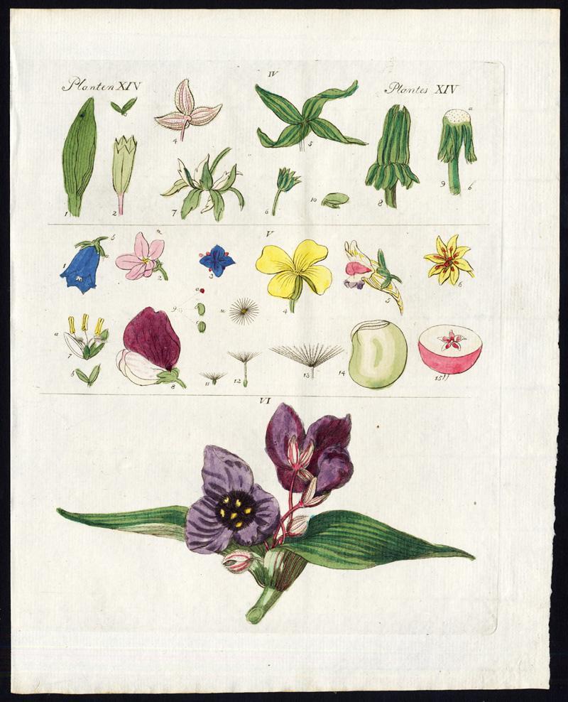 Antique Print-FLOWERS-PLANTS-SEPAL-SEEDS-BOUQUET-Bertuch-1800 Plate: Plantes XIV. This plate shows parts of flowers / plants: 1. Sepals - 2. Flowers and seeds - 3. Flower bouquet. Tekst /description page in Dutch