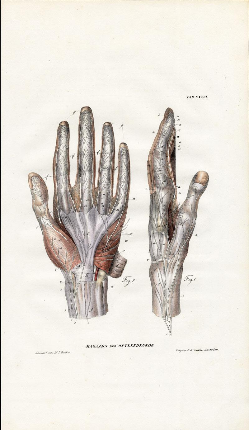 Antique Anatomy Print Neurology Nerve Hand Richter 1839