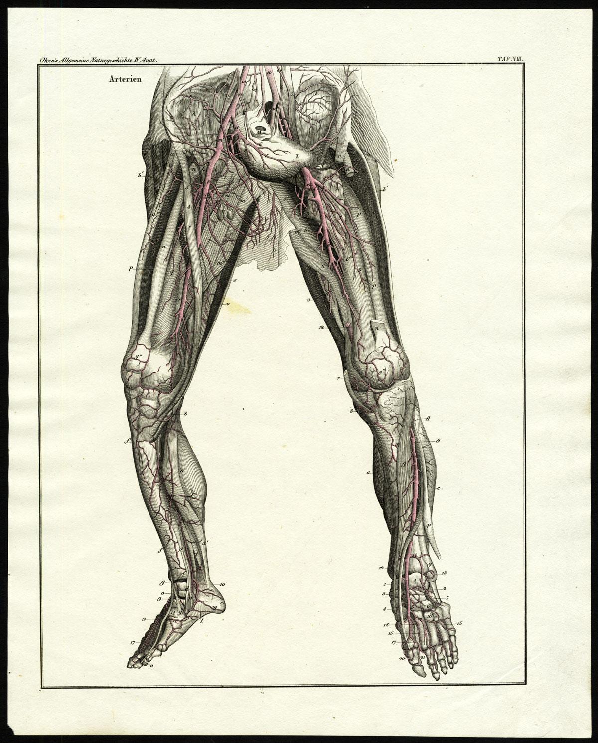 Groß Zitteraal Anatomie Galerie - Anatomie Und Physiologie Knochen ...
