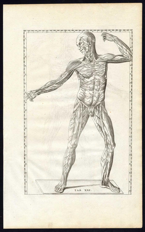 3 Antique Prints Human Anatomy Muscles Nerves Front Xxi Albinus