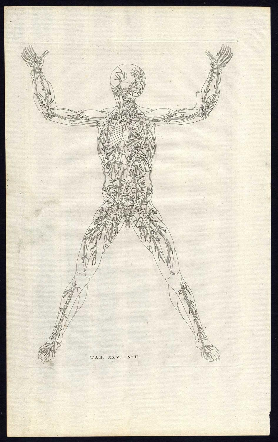 3 Antique Prints-ANATOMY-ARTERY-FRONT-VEINS-HEART-PL XXV-Albinus ...