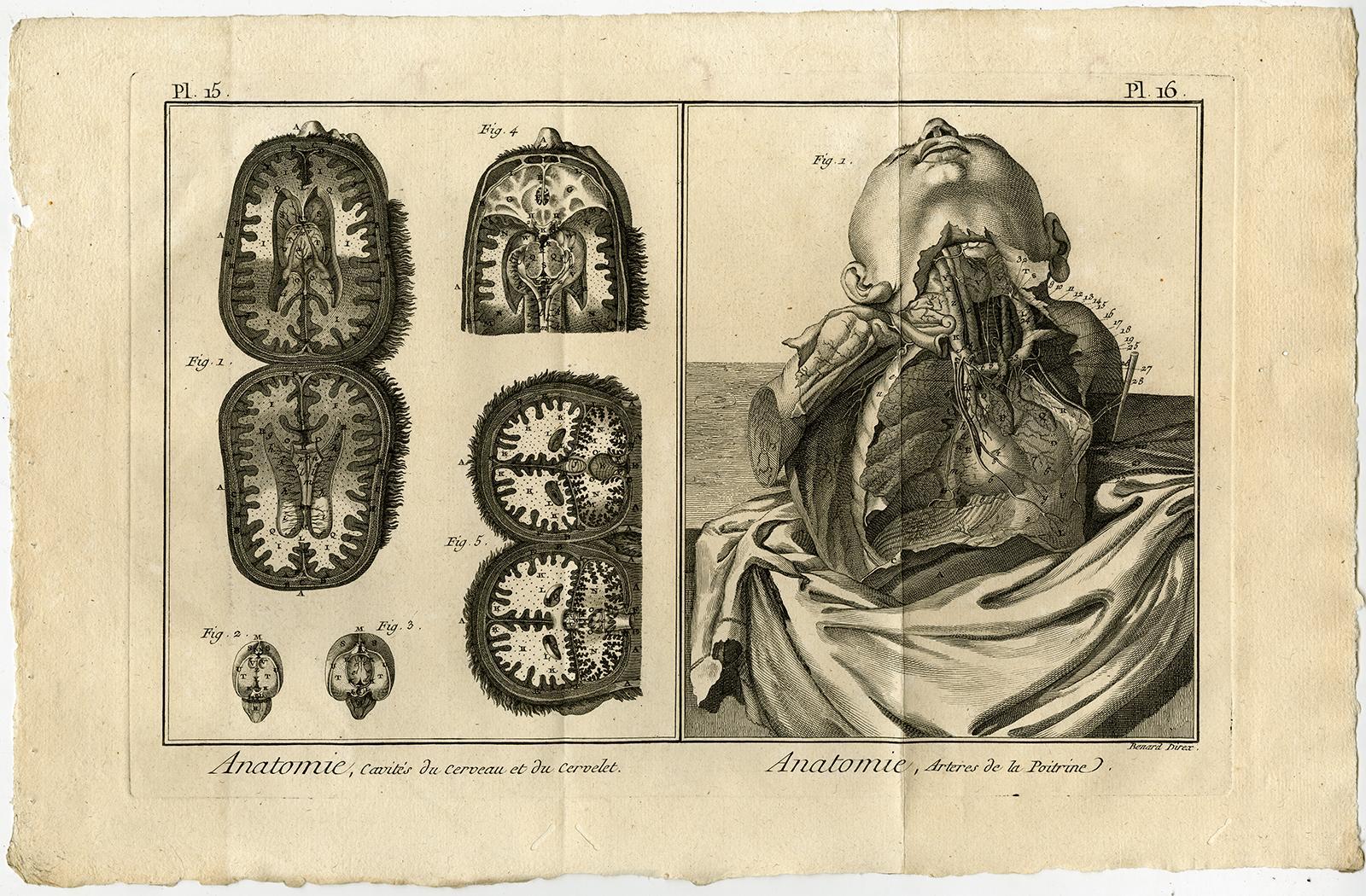 2 antique prints human - ZVAB