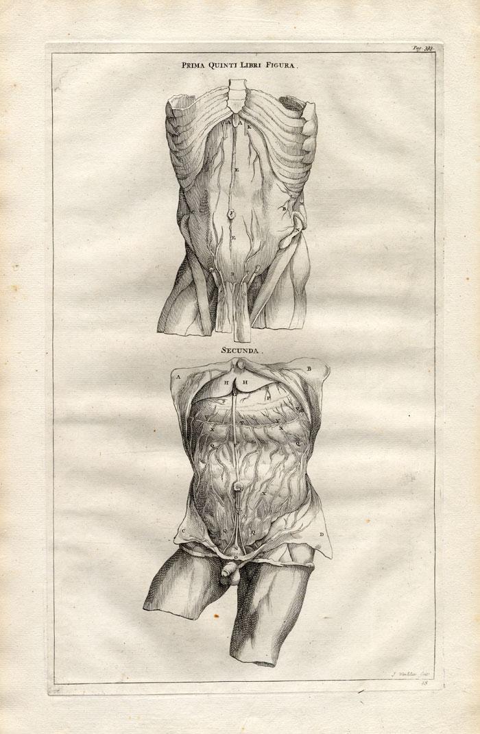 4 Antique Medical Prints Body Intestines Vesalius 1725