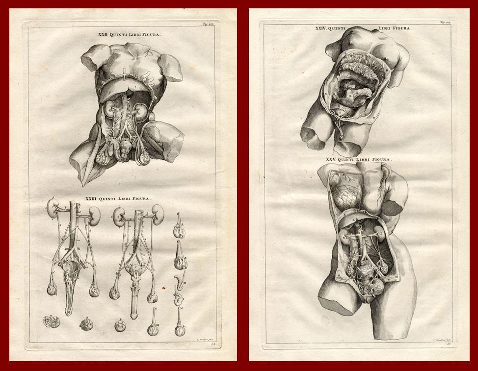 Nett Kopfnickers Anatomie Galerie - Anatomie Ideen - finotti.info