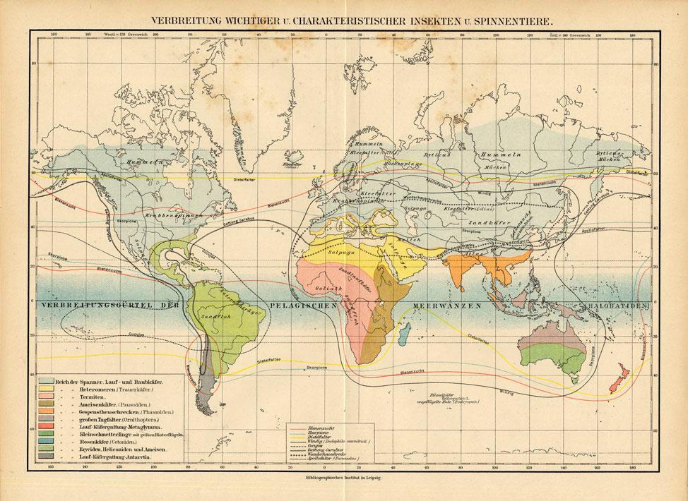 Antique Map-INSECT-WORLD-SPREAD-Brehm-1892