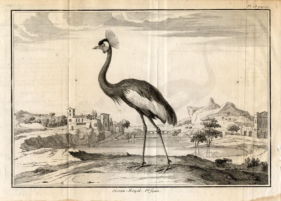 2 Antique Prints-CRANE-ANATOMY-Perrault-Duflos-1734 Set of 2 engravings: 'Oiseau-Royal'. (Crowned Crane): The first plate shows a Crowned Crane in a natural African landscape. The second plate shows the