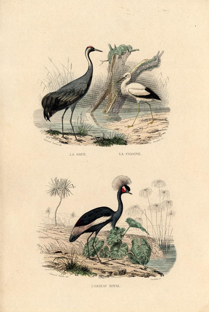 Antique Print-CRANE-CROWNED CRANE-STORK-Buffon-1839 Plate: 'La Grue - La Cigogne.L' Oiseau Royal'. (Common or Eurasian Crane - Stork. Crowned Crane.) Steel engraving on vellin type paper. Original old h
