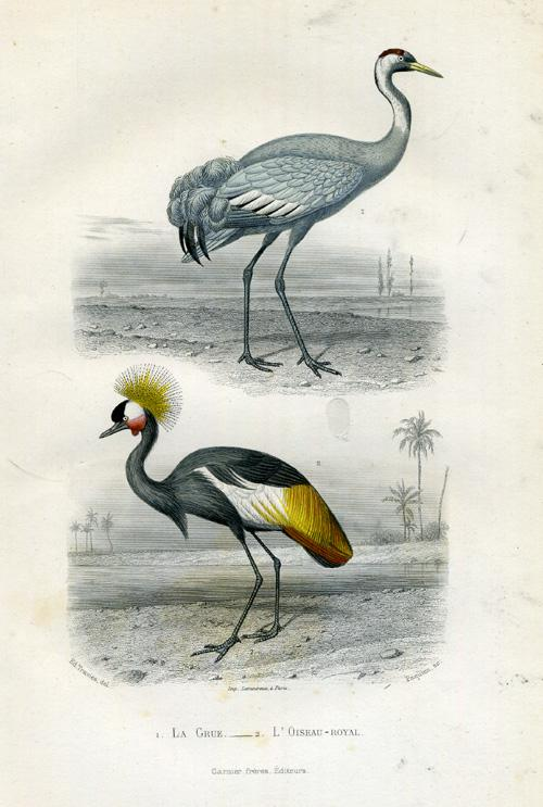 Antique Print-GREY CRESTED CRANE-Buffon-1853 Plate: 'Le Grue - L' Oiseau-royal'. (Common Crane - Grey Crowned Crane.) Steel engraving on vellin type paper. Original old hand colouring, heightened