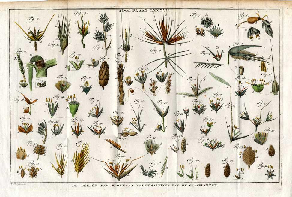 Plantes Grasses Zvab