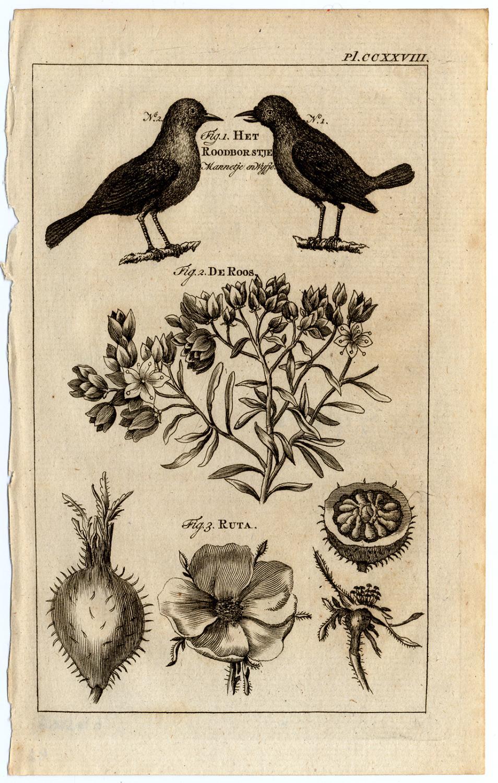 Antique Print-RUE-ROSE-REDBREAST-HERB OF GRACE-Buys-1770   [ ] (bi_22589601718) photo