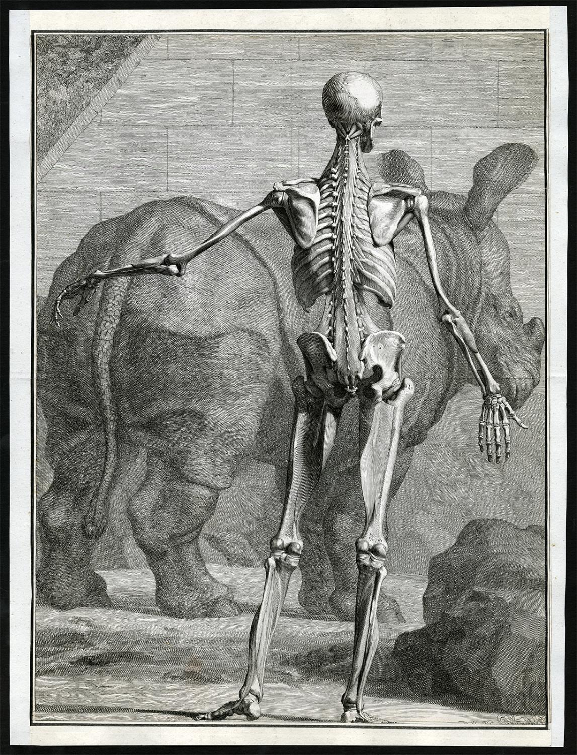 Rhinoceros an Antique Print - AbeBooks