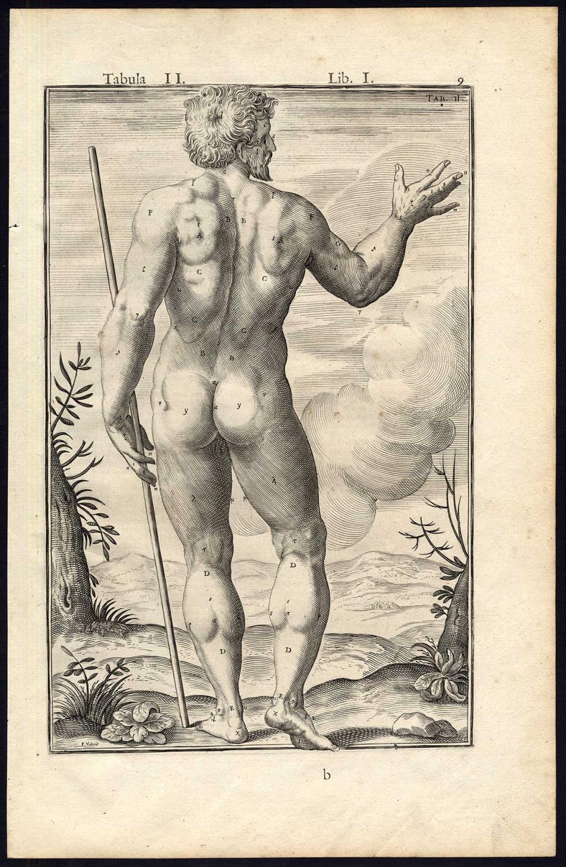 2 Rare Antique Anatomical Prints Man Naked Model Spigelius Casserius