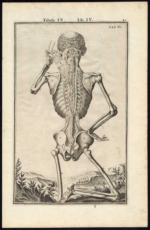 5 Rare Antique Anatomical Prints Muscle Back Man Layer Spigelius
