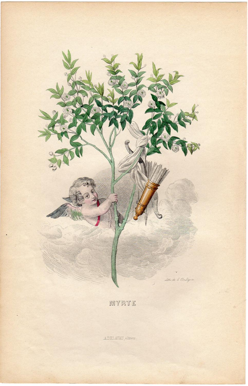Antique Print-FLOWERS PERSONIFIED-MYRTLE-CUPID-Grandville-1852