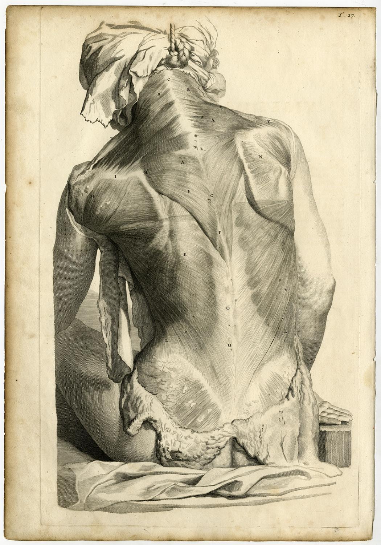 4 Medical Antique Prints T27 30 Human Back Muscles Bidloo Lairesse