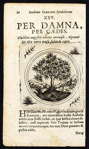 Antique Print-HOLM OAK-GROWTH THROUGH SHEARING-PROVERB-Sibmacher-Camerarius-1697