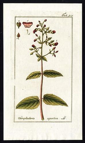 Antique Flora Print-SCROPHULARIA AURICULATA-AQUATICA-WATER FIGWORT-Zorn-1796
