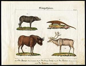 Antique Print-BABIRUSA-SAIGA ANTELOPE-REINDEER-LONG TAILED PANGOLIN-Wilmsen-1821