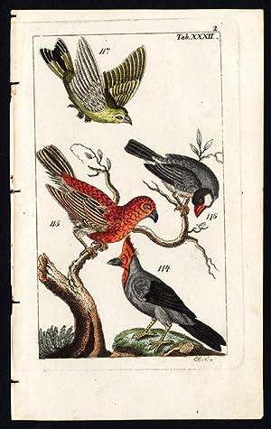 Antique Print-PINE GROSBEAK-JAVA SPARROW-GREENFINCH-PLATE XXXII-Wilhelm-1810