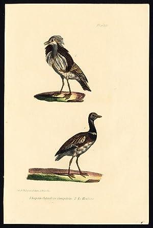 Antique Print-BIRD-LITTLE BUSTARD-HOUBARA-PLATE 16-Buffon-Burggraaff-1828