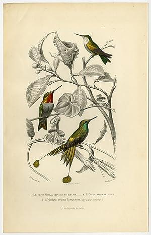 Antique Print-HUMMINGBIRD-RUBY THROAT-BIRDS-Buffon-1853