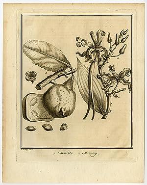 Antique Print-FRUIT-VANILLA-MAMEY SAPOTE-Schley-Prevost-1767