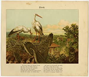 Antique Print-ORNITHOLOGY-STORK-ROOFTOP NEST-Anonymous-ca. 1880