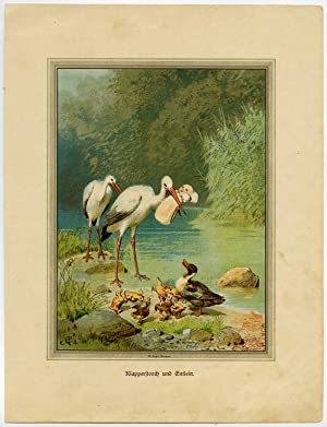 Antique Print-ORNITHOLOGY-STORK-DUCKLING-BABY-Seeger-ca. 1880