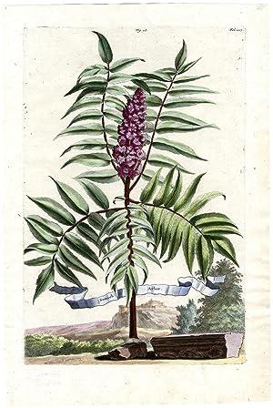 Shop Natural History (Botanical) Collections: Art