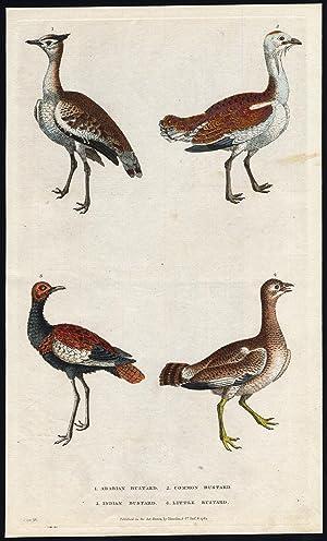 Antique Print-COMMON BUSTARD-ARABIAN-INDIAN-LITTLE-Martyn-1785