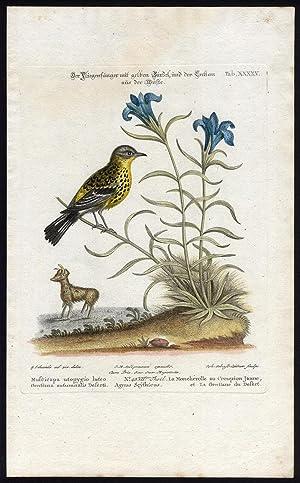 Antique Print-MAGNOLIA WARBLER-GENTIAN-XXXXV-Seligmann-Leitner-Edwards-1768