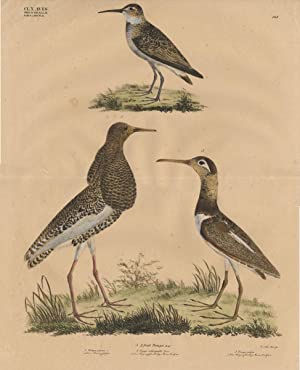 Antique Bird Print-RUFF-CURLEW-LAPWING-Goldfuss-1824