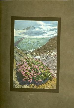 Alpine Flowers and Rock Gardens: Wright, Walter P.