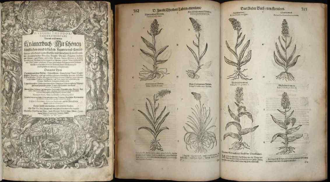 New und vollkommen Kräuterbuch / Mit schönen: Tabernaemontanus, Jakob Theodor:
