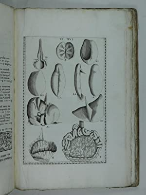 Tabulae anatomica . Praefatione, ac notis illustravit: Eustachi, Bartholomeo: