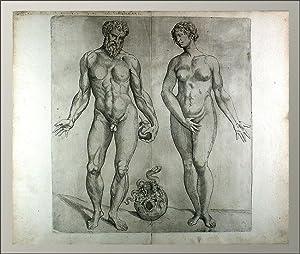 Tafeln zu: Anatomia Deudsch. Herausgegeben von Jakob: Vesalius, Andreas