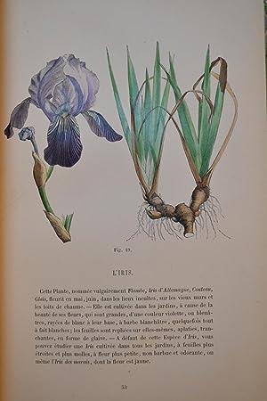Leçons élémentaires de botanique fondées sur l'analyse de 50 plantes vulgaires et formant un ...