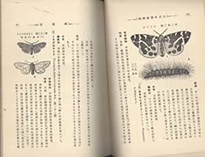 Conspectus of Japanese Injurious Insects: Shonen Matsumura