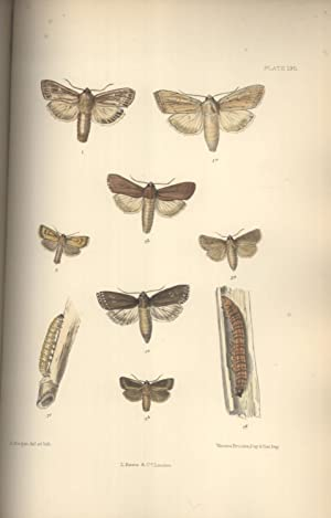 The Lepidoptera of the British Islands: A Descriptive Account of the Families, Genera and Species ...