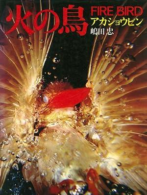 Hi no tori, akashobin / Ruddy kingfisher: Tadashi Shimada