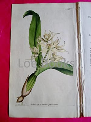 ORIGINAL HAND-COLOURED COPPER ENGRAVING - Epidendrum cochleatum (Two Leav'd Epidendrum) FROM CURT...
