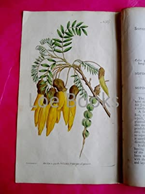 ORIGINAL HAND-COLOURED COPPER ENGRAVING - Sophora tetraptera (Winged-Podded Sophora) FROM CURTIS'...