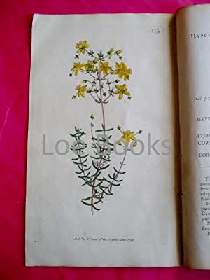 ORIGINAL HAND-COLOURED COPPER ENGRAVING - Hypericum coris (Heath-Leaved St. John's-Wort) FROM CUR...