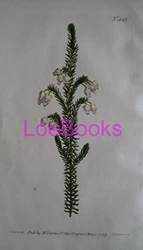 ORIGINAL HAND-COLOURED COPPER ENGRAVING - Erica physodes (Sticky-Flowered Heath) FROM CURTIS'S BO...