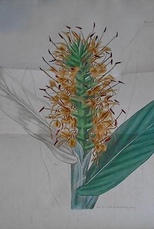 CURTIS' BOTANICAL MAGAZINE; OR, Flower-Garden Displayed. vols: Sims, John; Curtis,