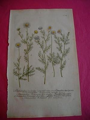 ORIGINAL COLOURED ENGRAVING - Chamaemelum; Camomille etc. - Plate No. 363 from Phytanthoza ...