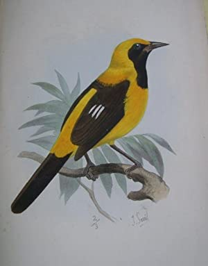 CATALOGUE OF THE PASSERIFORMES OR PERCHING BIRDS,: Sclater, Philip Lutley